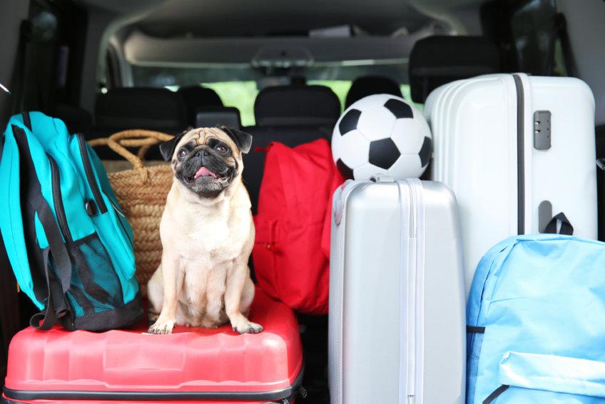 Chegaram as férias e agora o que levar?